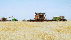 شونتان و4 صوامع لاستقبال محصول القمح في القليوبية