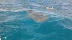 """""""حماية الطبيعة"""": قرار قتل سمكة القرش برأس محمد قد يتخذ غدا"""