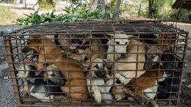 «الزراعة»: تطعيم الكلاب يحمى أصحابها من المسؤولية القانونية حال «العض»