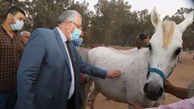 اليوم.. وزير الزراعة يفتتح ويتفقد مشروعات زراعية وإنتاج ألبان بالغربية