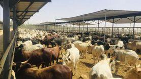 «الوطنية للإنتاج الحيواني»: تحليل المنتجات يوميا قبل طرحها