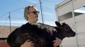 بعيدا عن السينما.. خواكين فينيكس لا يأكل اللحم ويدافع عن حقوق الحيوان