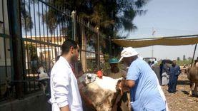 الزراعة تنفيذ 6 قوافل بيطرية لفحص وعلاج المواشي مجانا بمحافظة الغربية