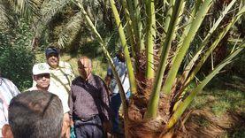 """""""الزراعة"""": جهود مكثفة لتنفيذ منظومة تحديث الري في الوادي الجديد"""
