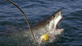"""التفاصيل الكاملة لهجوم أسماك القرش على 3 أشخاص بمحمية """"رأس محمد"""""""