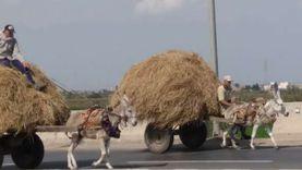 700 نشاط توعوي لـ«بيئة الدقهلية» للاستفادة من قش الأرز