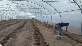 5 صوب بسانت كاترين لتدريب المواطنين على الزراعة
