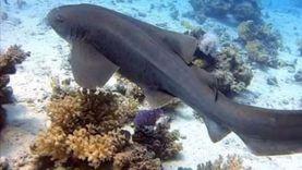 العيد قبل آوانه بشواطئ الغردقة.. سائحون يسبحون مع القرش ويلتقطون الصور