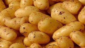 انخفاض كبير في أسعار الخضروات.. والشعبة: مصر الأرخص عالميا