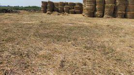 الزراعة: جمع وتدوير أكثر من 787 ألف طن قش الأرز وتنظيم 653 ندوة ارشادية في 6 محافظات