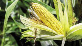 «حماة الوطن» ينفي طرح مشروع قانون لبيع المياه للمزارعين