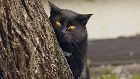 شيخ يحذر من ضرب القطط والكلاب السوداء ليلًا: قد تكون من الجن المُشكل
