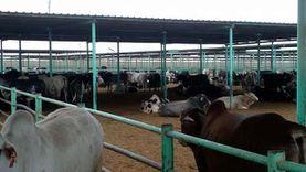7 مناطق مقترحة لإقامة مزرعة للثروة الحيوانية بجنوب سيناء
