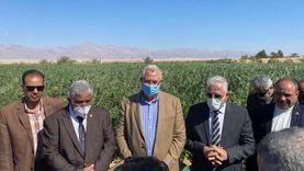 خالد فودة يعلن نجاح زراعة البلح المجدول في جنوب سيناء