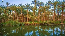 فاو: النخيل أهم كنوز مصر الغذائية وتحتل المرتبة الأولى عالميا في إنتاجه بـ21%