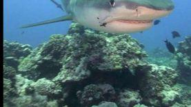 """خبير بحري: """"القرش"""" لا يستسيغ لحم الإنسان ويلفظه"""