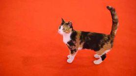 مَن قتل قطة مهرجان القاهرة بالسم؟ اعرف قصتها