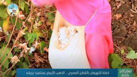 خطة للنهوض بالقطن المصري.. الذهب الأبيض يستعيد بريقه (فيديو)
