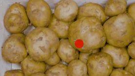 """رئيس """"دالتكس"""": البطاطس تواجه كارثة.. وإنتاج العروة الشتوية يتم إعدامه"""