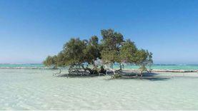 «سي إن إن» تقارن بين المالديف ومرسى علم: قطعة من الفردوس بالبحر الأحمر