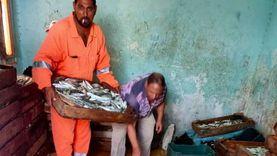 توزيع 24 طنا من الأسماك على منافذ جنوب سيناء