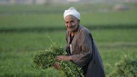 كيف يحمي المًزارعين محصولهم من طقس طوبة؟ مركز تغير المناخ يُجيب