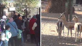 حيوانات وحيدة بدون زوار في حديقة الجيزة رغم الزحام