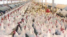 تحصين 12 ألف طائر وتطهير 9 أسواق و11 ألف منشأة حكومية في كفر الشيخ