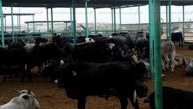 غدا.. جنوب سيناء تستقبل 3 آلاف رأس ماشية عبر ميناء الطور