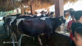 «الزراعة»: الأسعار في الأسواق المصرية لم تتأثر بكورونا