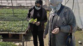 زراعة الإسكندرية ترخص 182 صوبة زراعية.. وتحذر من التقاوي المغشوشة