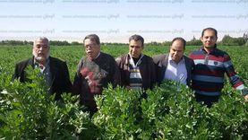 تعرف على مشروعات التنمية الزراعية في سيناء