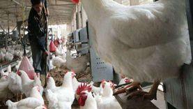 «قبل ما تغامر».. 5 أسباب وراء خسارة أي مشروع مزرعة دواجن