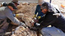 لأول مرة في مصر.. اكتشاف عظام سلحفاة بحرية عمرها 70 مليون سنة