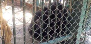 أشهر «كابلز شمبانزي»في حديقة الحيوان.. قصة حب «البرنس وإنجي»بدأت من12س