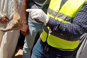 بالصور.. العثور على سحر في حملة لتنظيف المقابر بسوهاج