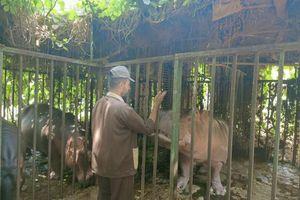 حديقة حيوان بني سويف تواصل استقبال الزائرين في ثاني أيام عيد الأضحى