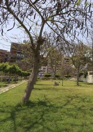 غلق الحدائق والمتنزهات بالمنصورة