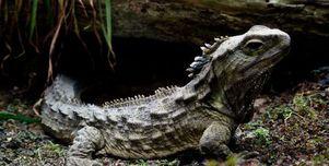 دراسة جديدة تكشف أصل أقرب أقارب الديناصورات