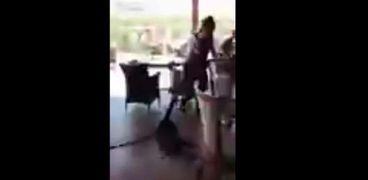 بالفيديو|نادلة فرنسية تخرج سحلية ضخمة من إحدى المطاعم