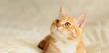 القطط تتعافى أسرع من البشر من فيروس كورونا