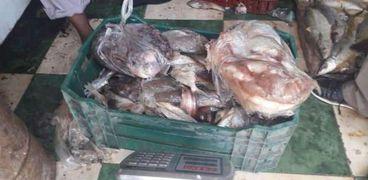 ضبط أسماك غير صالحه للاستخدام في حملة بسفاجا