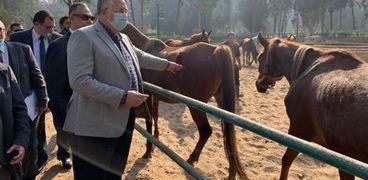 وزير الزراعة يتفقد محطة الزهراء للخيول العربية الأصيلة لتطويرها ورفع كفاءتها