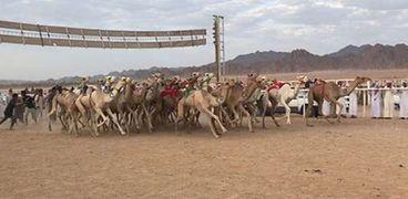 مهرجان شرم الشيخ لسباق الهجن
