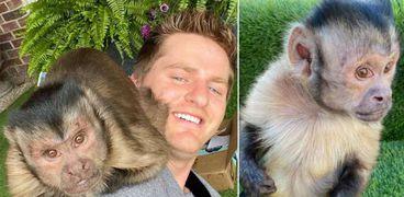 القرد جورج بوى ومالكة.. أشهر حيوان على تيك توك