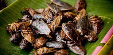 """على طريقة """"فول الصين العظيم"""".. 3 دول تعتمد الصراصير غذاء رئيسيا"""