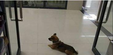 الكلب في بهو المستشفى