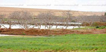 الزراعات المطرية في مطروح