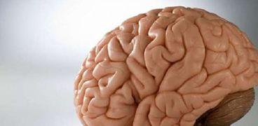 دوائر فى المخ تتعرف بسرعة على المشاعر