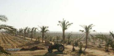 أعمال استصلاح اراضي زراعية.. صورة أرشيفية